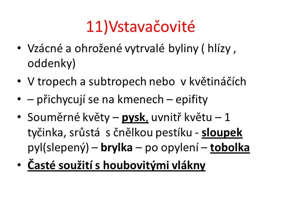 11)Vstavačovité Vzácné a ohrožené vytrvalé byliny ( hlízy , oddenky)