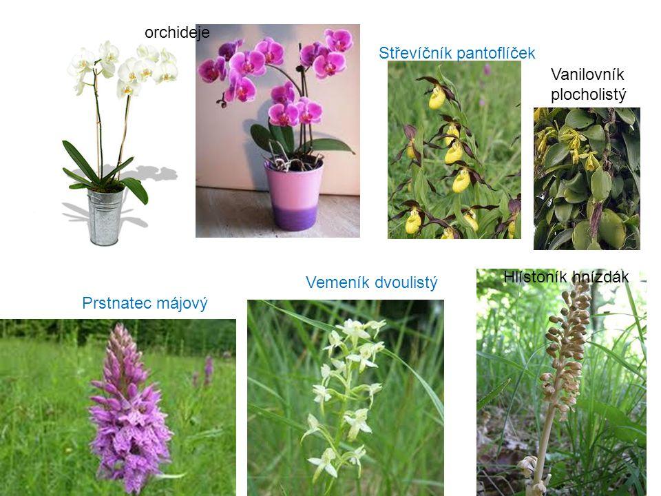 orchideje Střevíčník pantoflíček. Vanilovník. plocholistý. Hlístoník hnízdák. Vemeník dvoulistý.