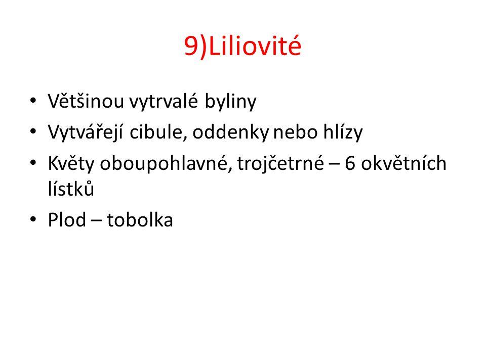9)Liliovité Většinou vytrvalé byliny