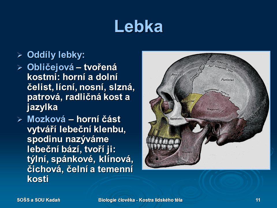 Biologie člověka - Kostra lidského těla