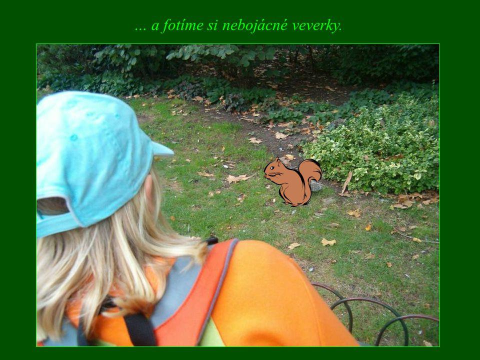 … a fotíme si nebojácné veverky.