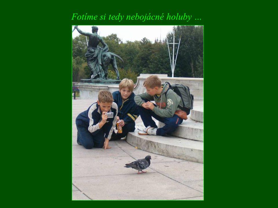 Fotíme si tedy nebojácné holuby …