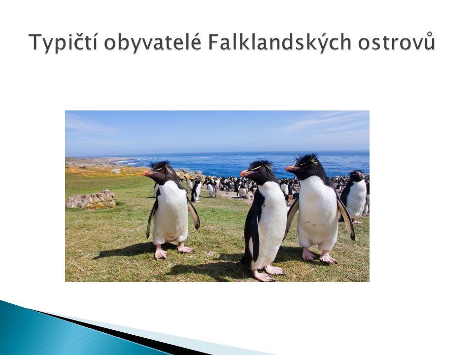 Typičtí obyvatelé Falklandských ostrovů