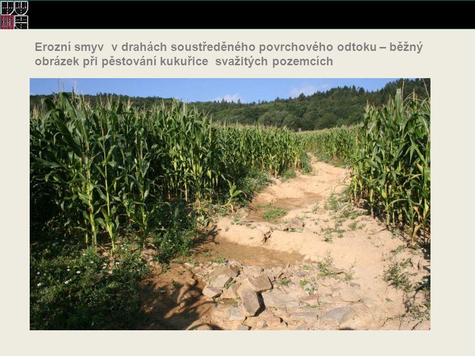 Erozní smyv v drahách soustředěného povrchového odtoku – běžný obrázek při pěstování kukuřice svažitých pozemcích