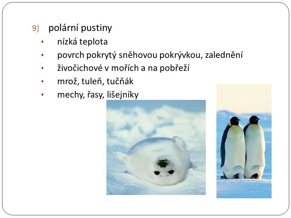 polární pustiny nízká teplota