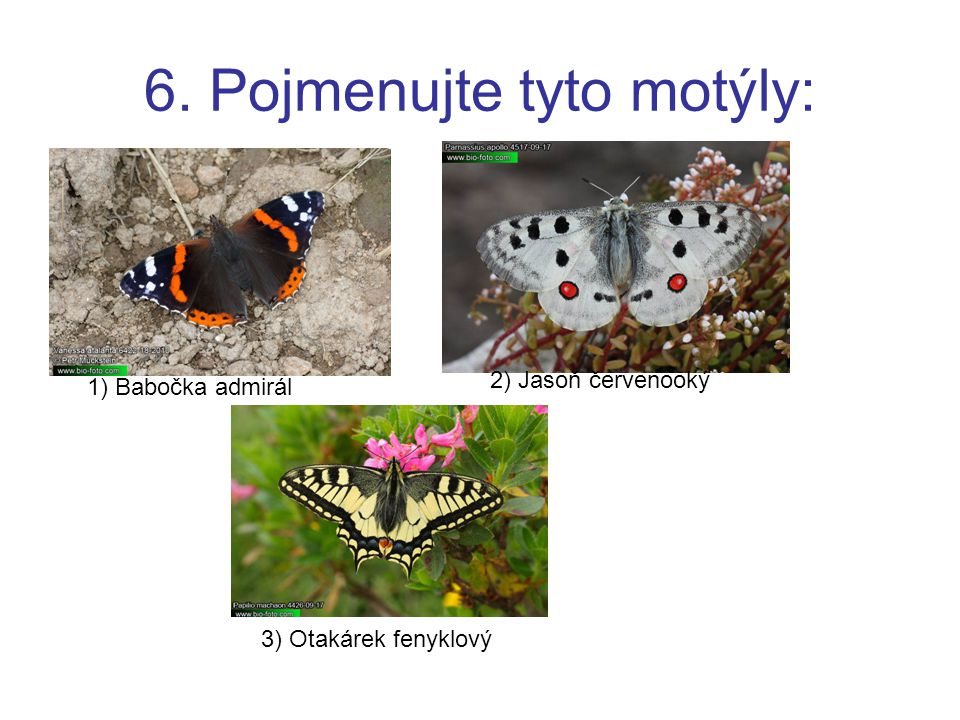 6. Pojmenujte tyto motýly: