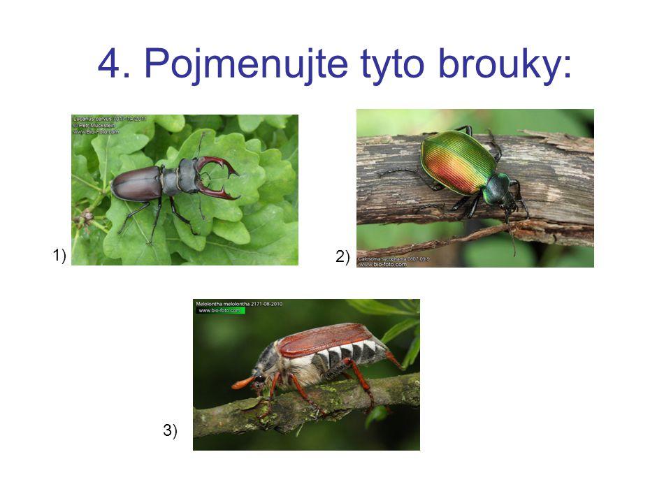 4. Pojmenujte tyto brouky: