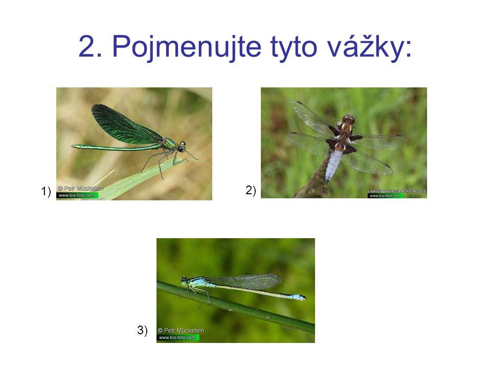 2. Pojmenujte tyto vážky: