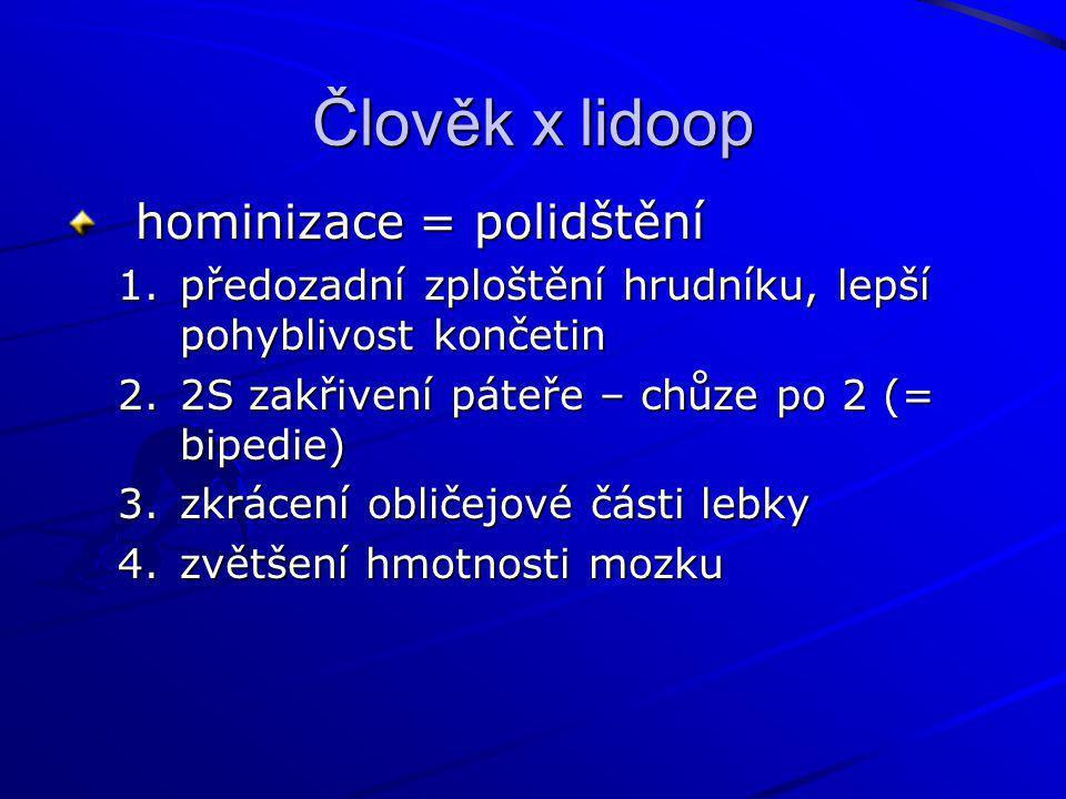 Člověk x lidoop hominizace = polidštění