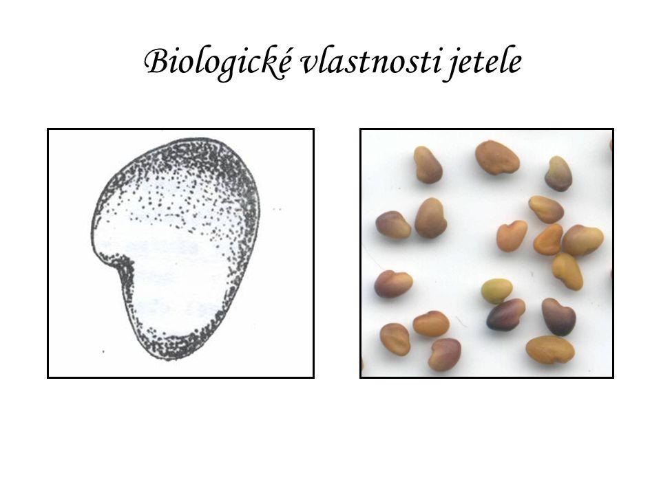 Biologické vlastnosti jetele