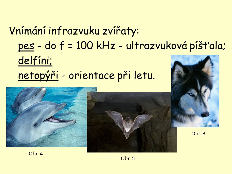 Vnímání infrazvuku zvířaty: