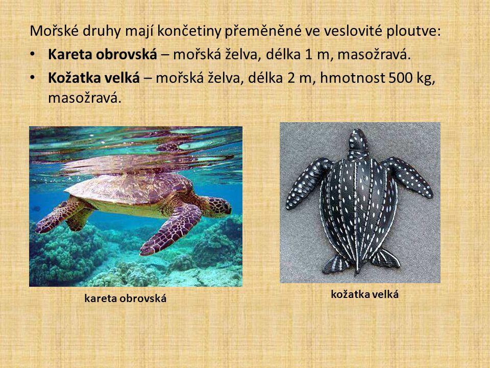 Mořské druhy mají končetiny přeměněné ve veslovité ploutve: