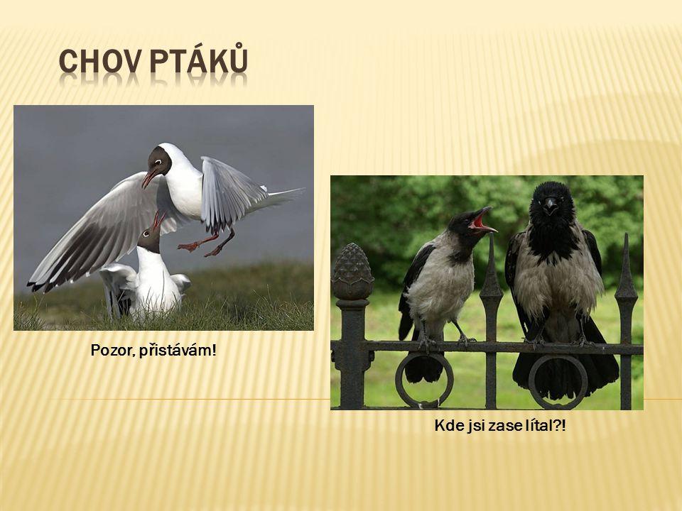 Chov ptáků Pozor, přistávám! Kde jsi zase lítal !