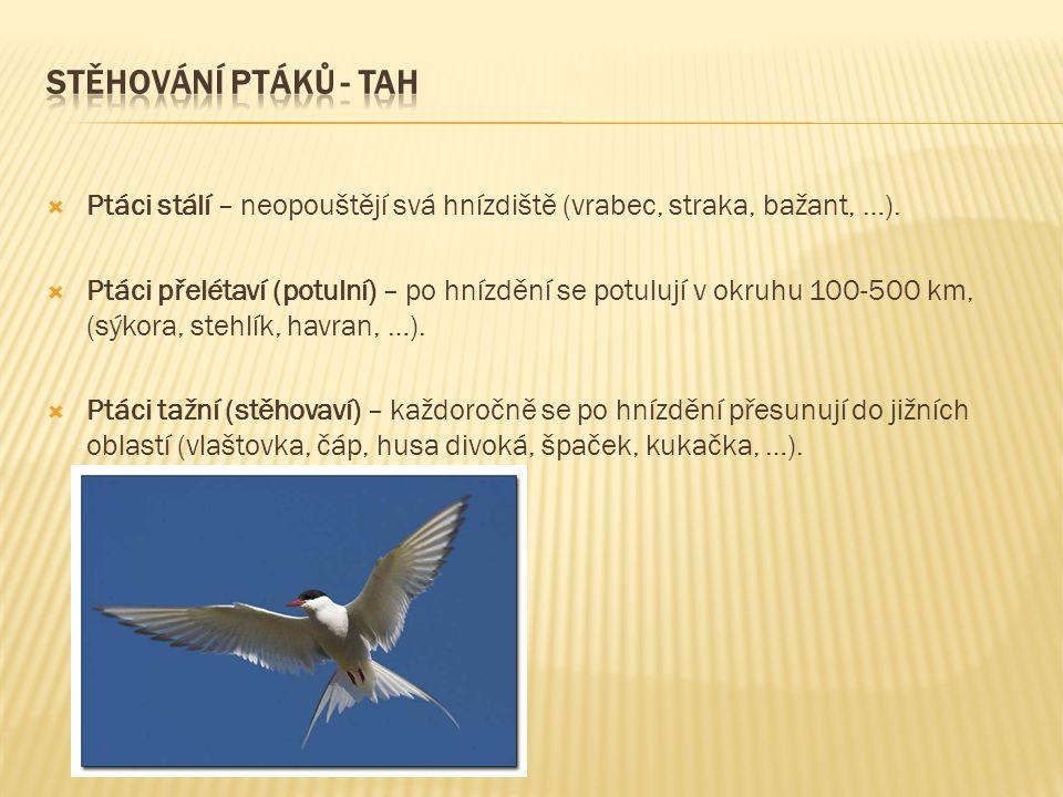 STĚHOVÁNÍ PTÁKŮ - TAH Ptáci stálí – neopouštějí svá hnízdiště (vrabec, straka, bažant, …).