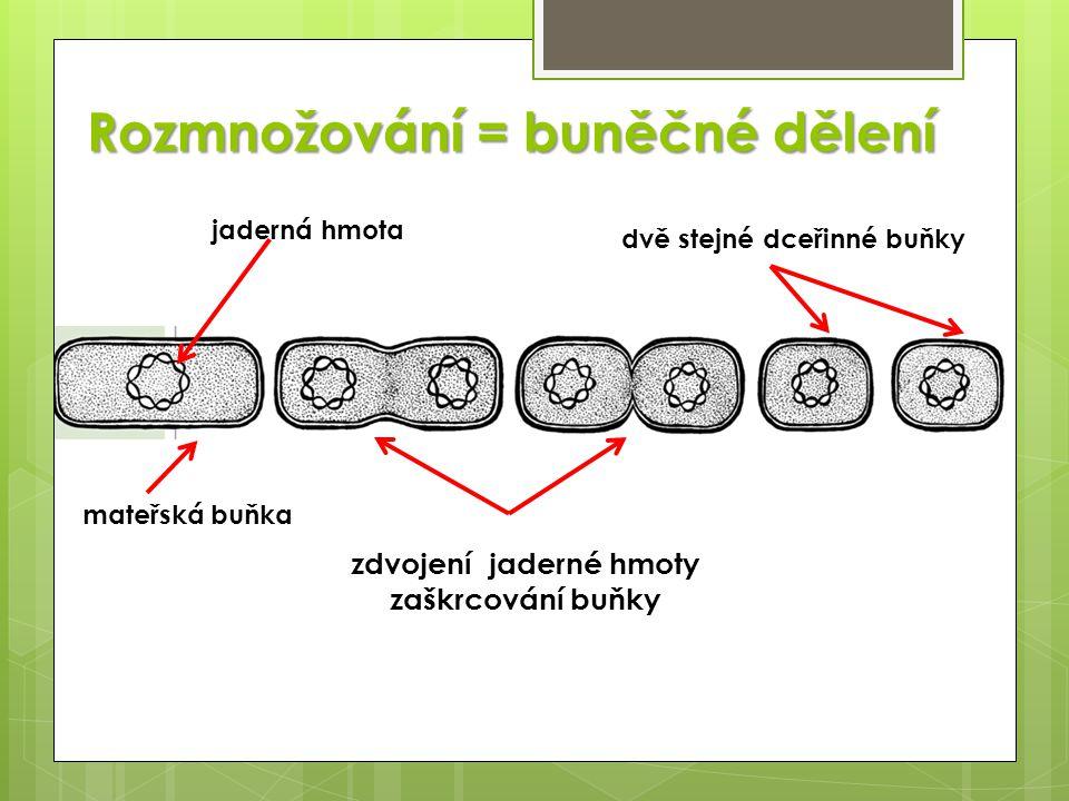 Rozmnožování = buněčné dělení