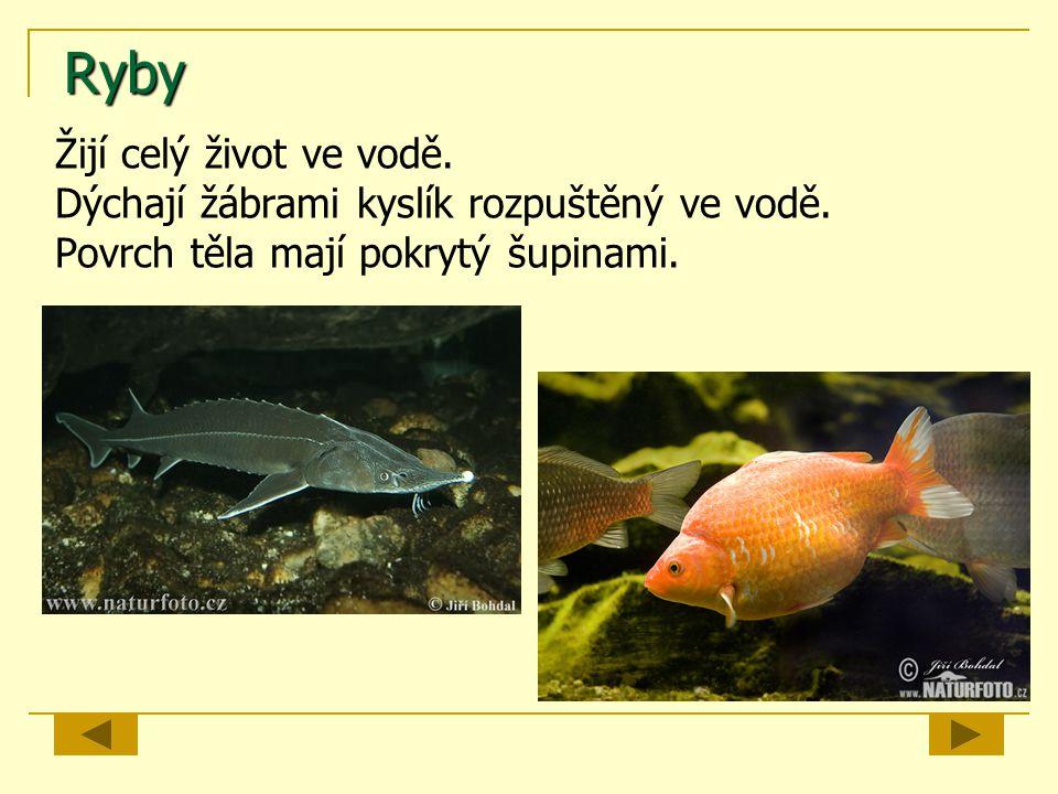 Ryby Žijí celý život ve vodě.