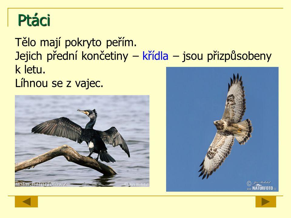 Ptáci Tělo mají pokryto peřím.