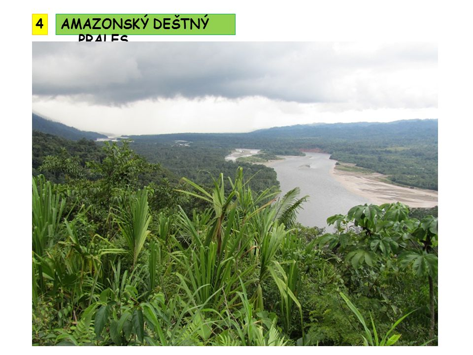 4 AMAZONSKÝ DEŠTNÝ PRALES