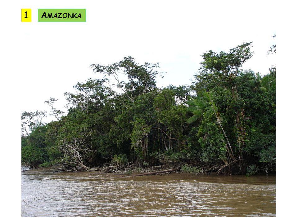 1 Amazonka