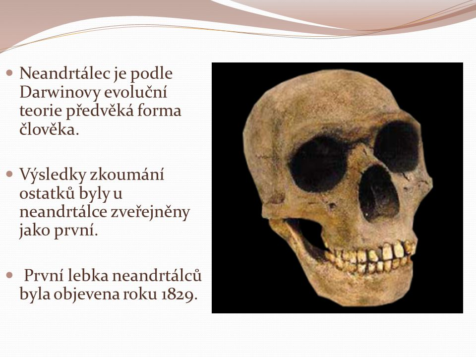 Neandrtálec je podle Darwinovy evoluční teorie předvěká forma člověka.