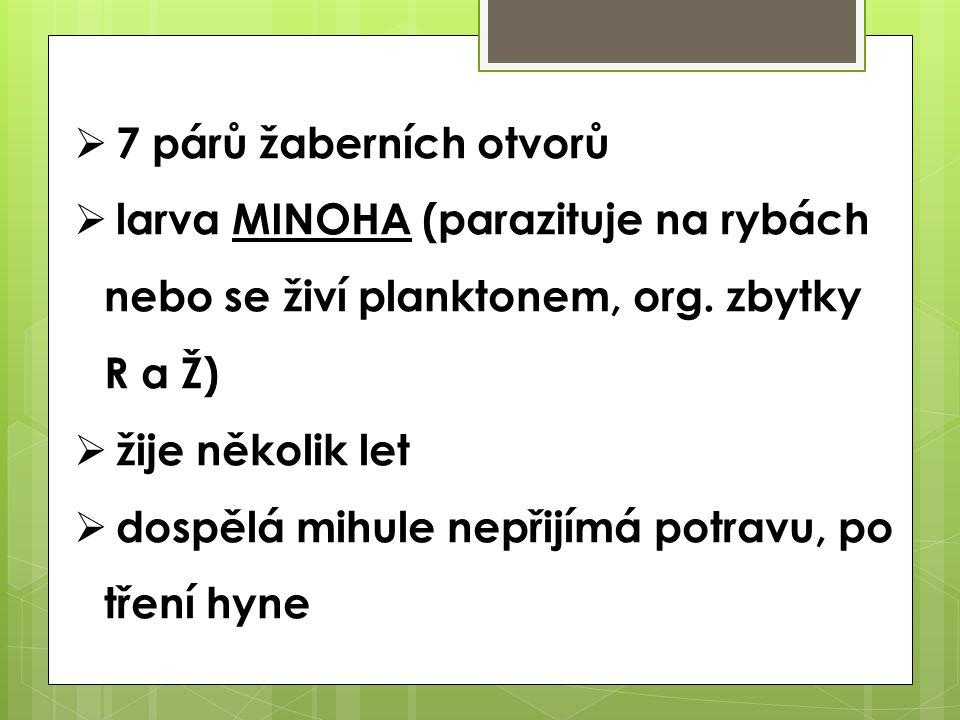 7 párů žaberních otvorů larva MINOHA (parazituje na rybách nebo se živí planktonem, org. zbytky R a Ž)