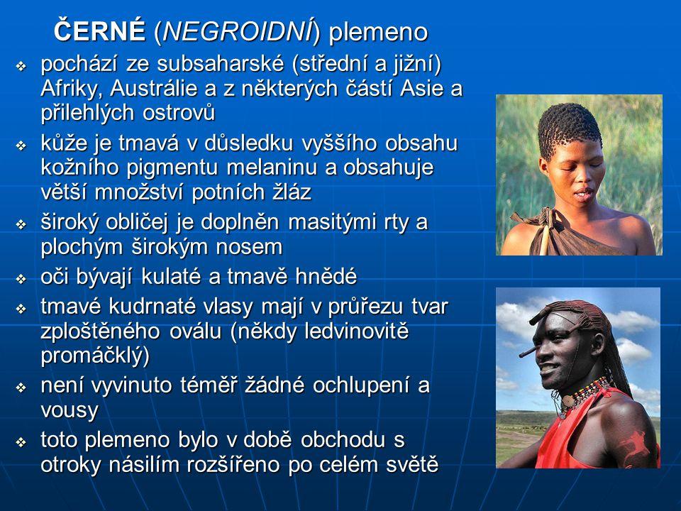 ČERNÉ (NEGROIDNÍ) plemeno