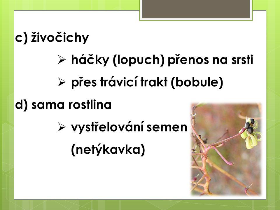 c) živočichy háčky (lopuch) přenos na srsti. přes trávicí trakt (bobule) d) sama rostlina.