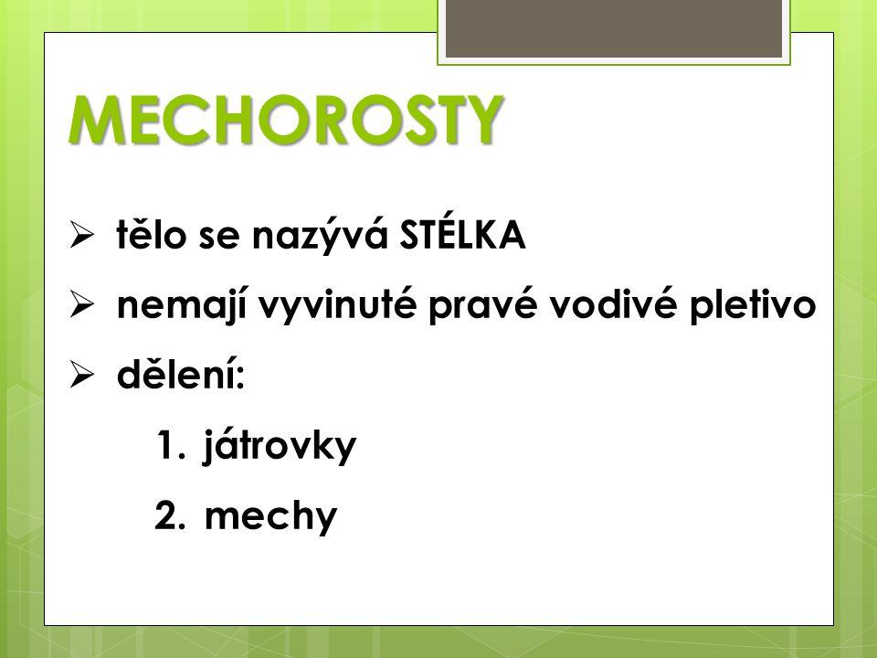 MECHOROSTY tělo se nazývá STÉLKA nemají vyvinuté pravé vodivé pletivo