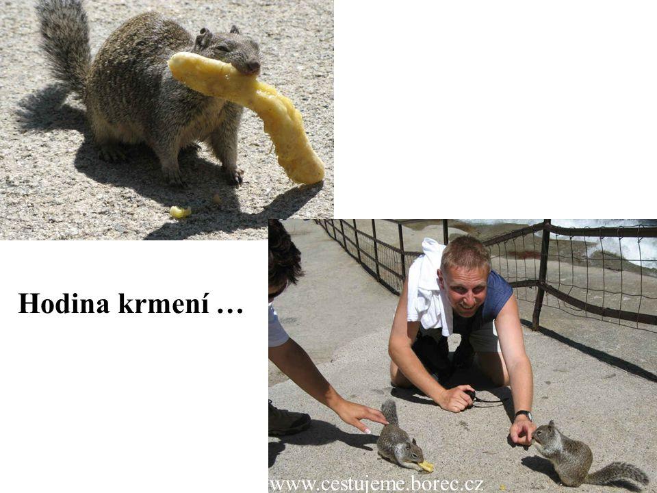 Hodina krmení … www.cestujeme.borec.cz