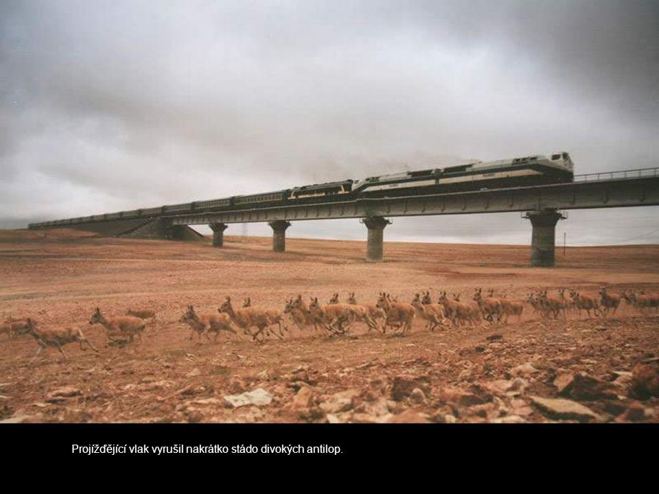 Projížďějící vlak vyrušil nakrátko stádo divokých antilop.
