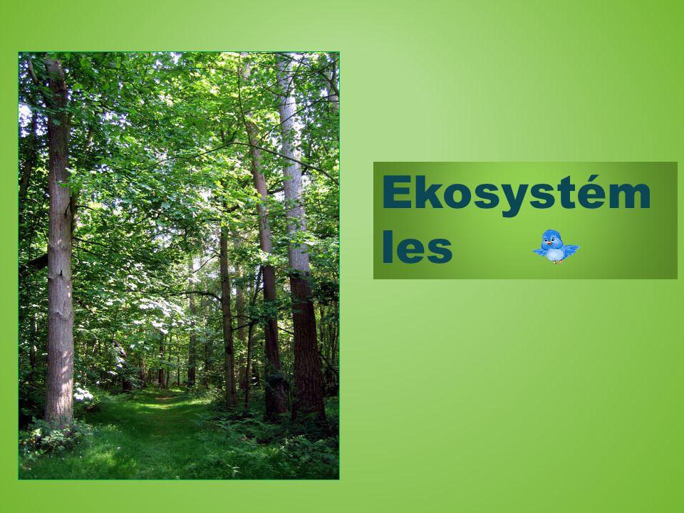Ekosystém les