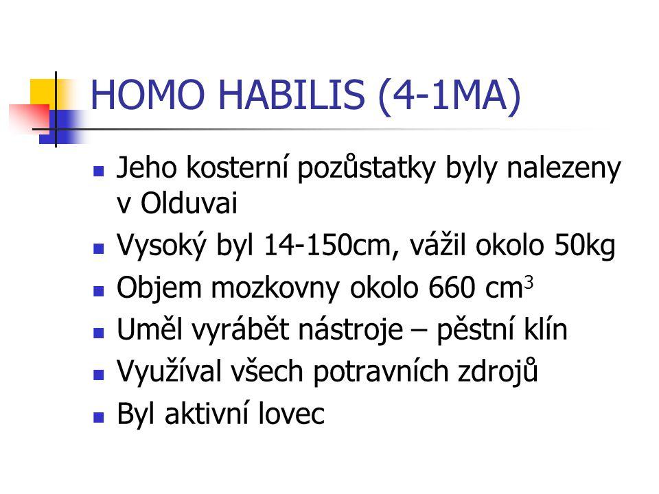 HOMO HABILIS (4-1MA) Jeho kosterní pozůstatky byly nalezeny v Olduvai