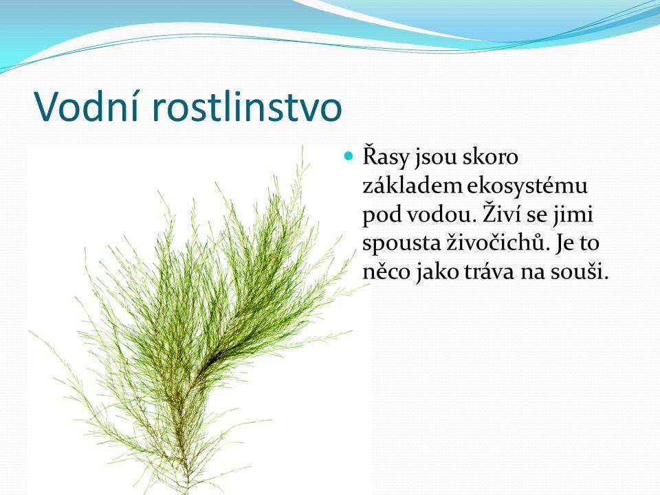 Vodní rostlinstvo Řasy jsou skoro základem ekosystému pod vodou.