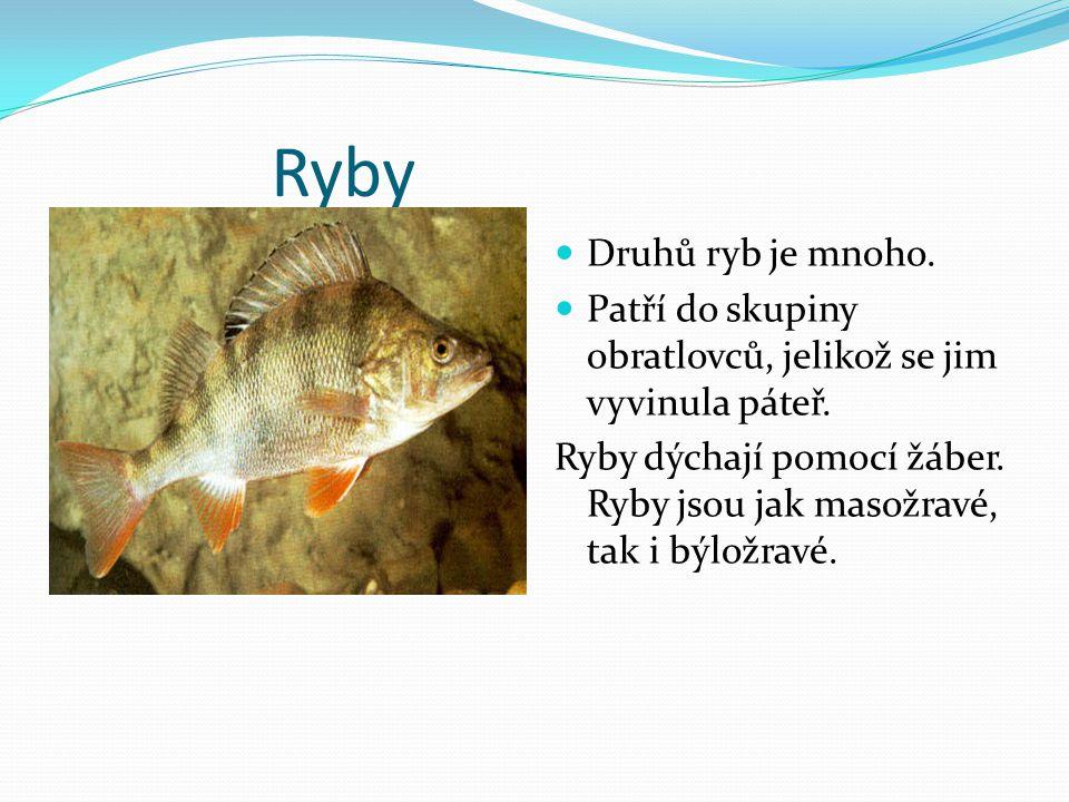 Ryby Druhů ryb je mnoho. Patří do skupiny obratlovců, jelikož se jim vyvinula páteř.