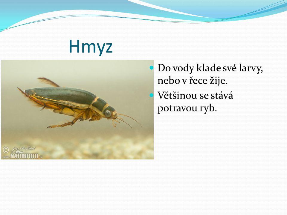 Hmyz Do vody klade své larvy, nebo v řece žije.