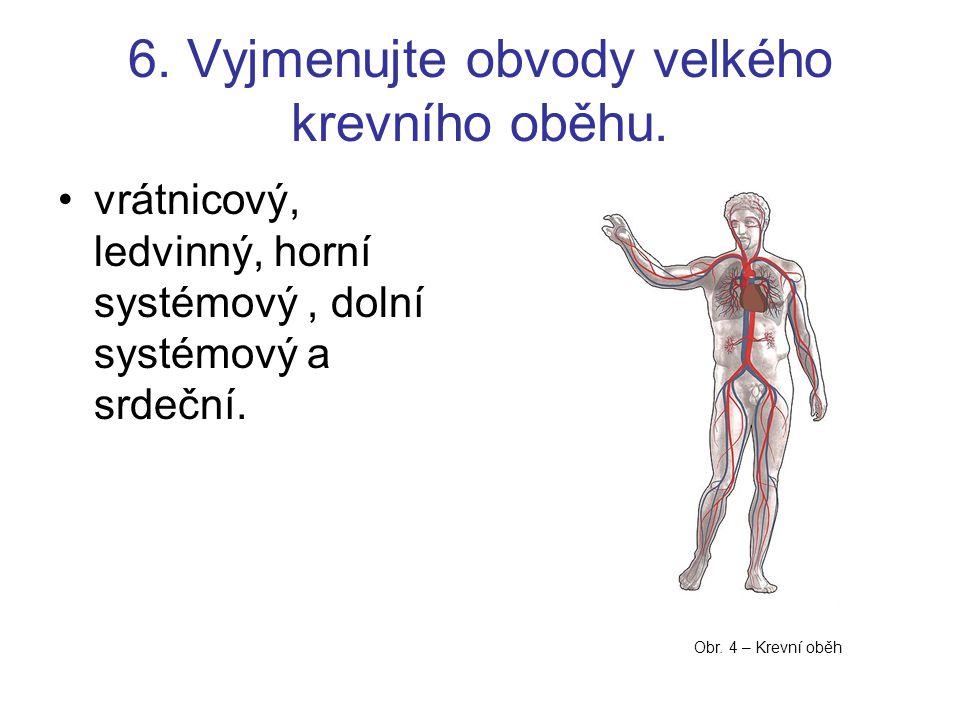 6. Vyjmenujte obvody velkého krevního oběhu.