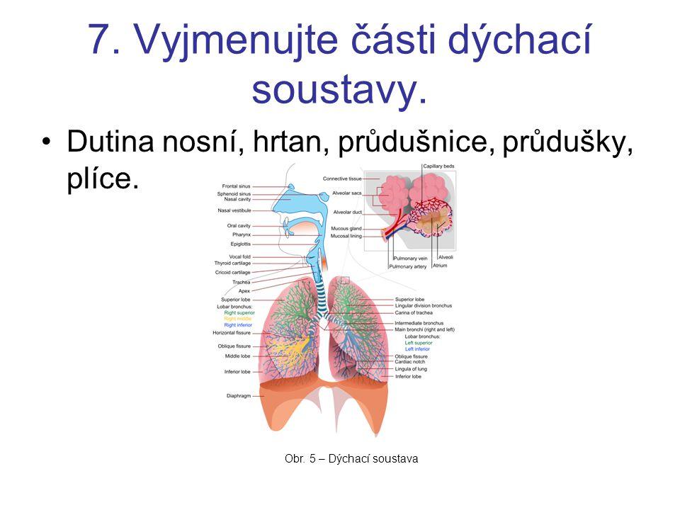 7. Vyjmenujte části dýchací soustavy.