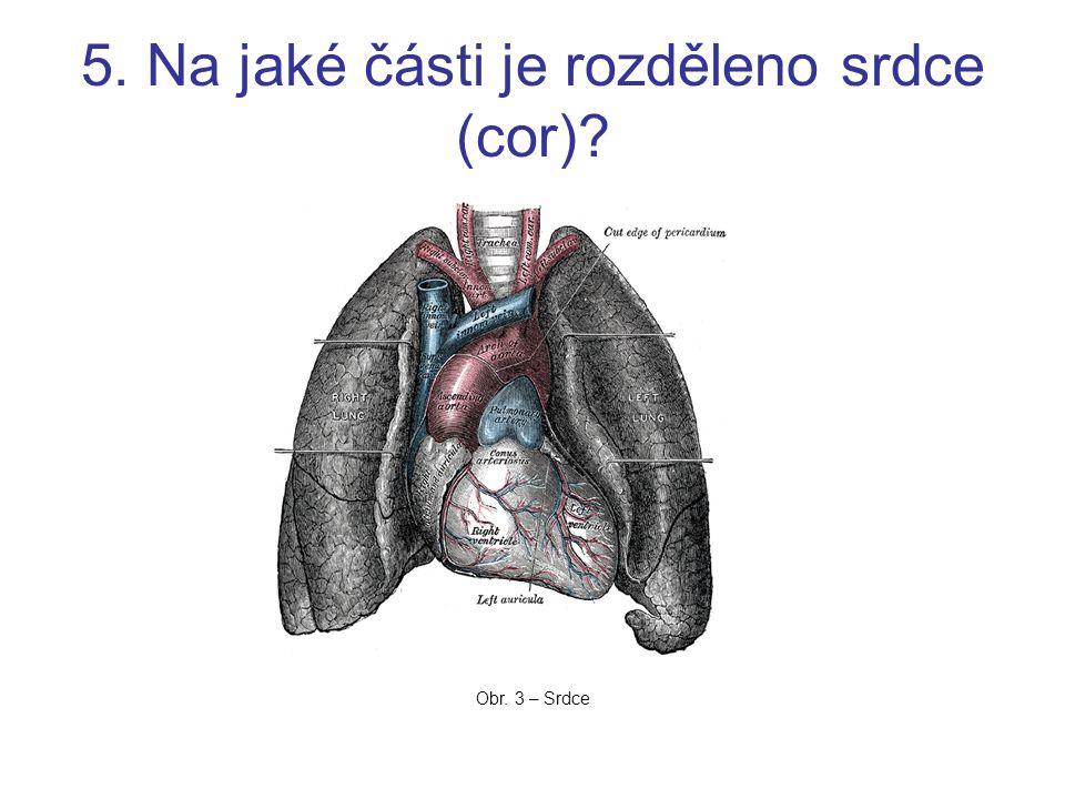 5. Na jaké části je rozděleno srdce (cor)
