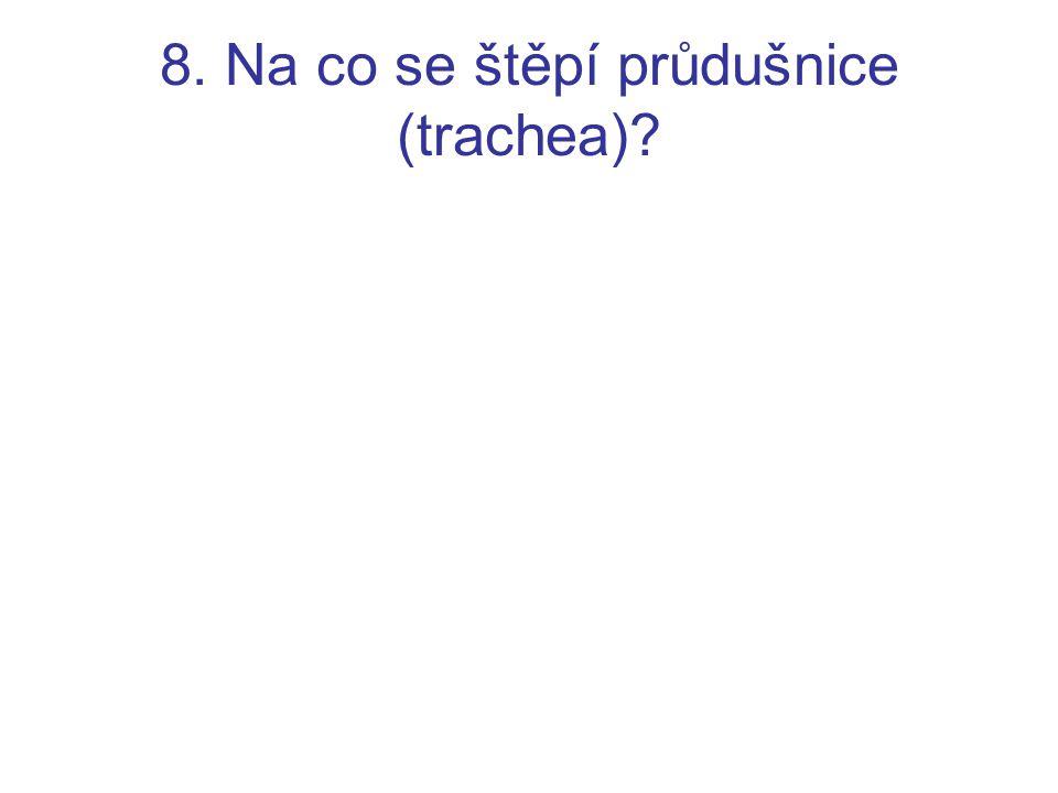8. Na co se štěpí průdušnice (trachea)