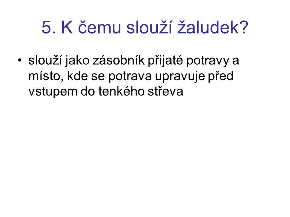 5. K čemu slouží žaludek.