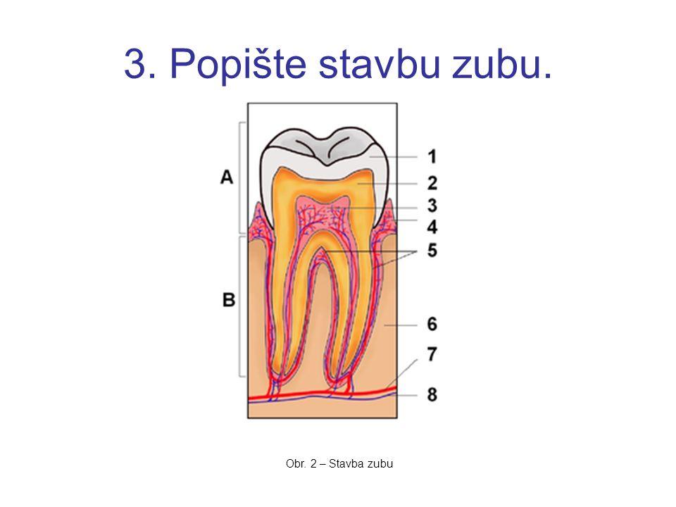3. Popište stavbu zubu. Obr. 2 – Stavba zubu