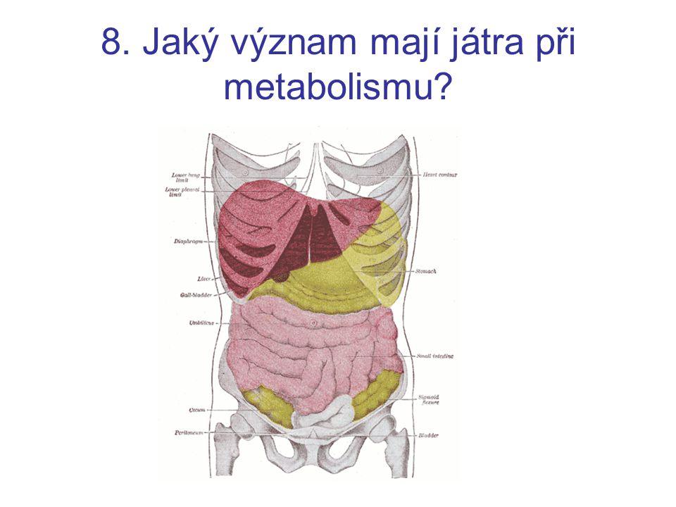 8. Jaký význam mají játra při metabolismu