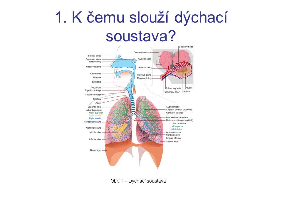 1. K čemu slouží dýchací soustava