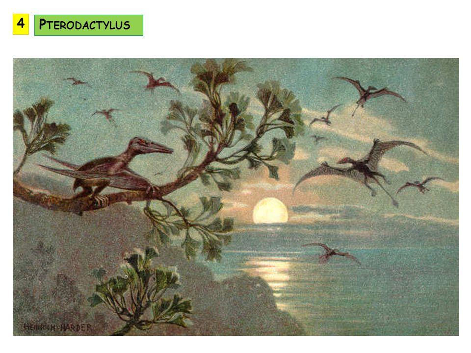 4 Pterodactylus
