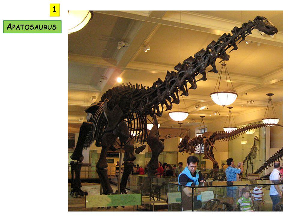 1 Apatosaurus