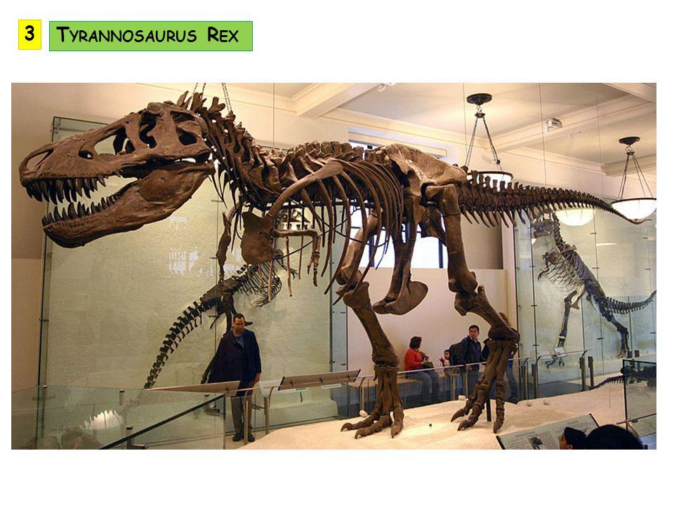 3 Tyrannosaurus Rex