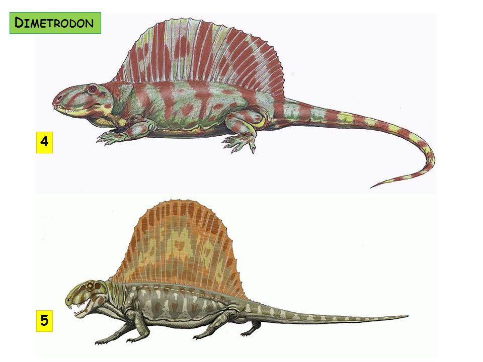 Dimetrodon 4 5