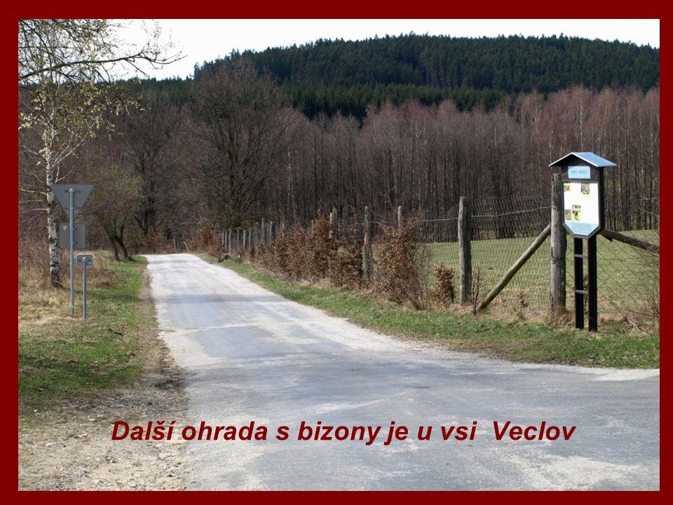 Další ohrada s bizony je u vsi Veclov
