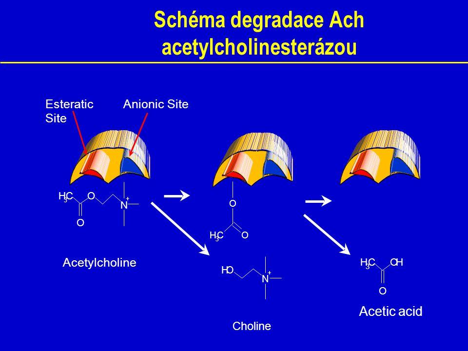 Beta amyloid Amyloid beta je tvořen z tzv. amyloidového prekurzorového proteinu.