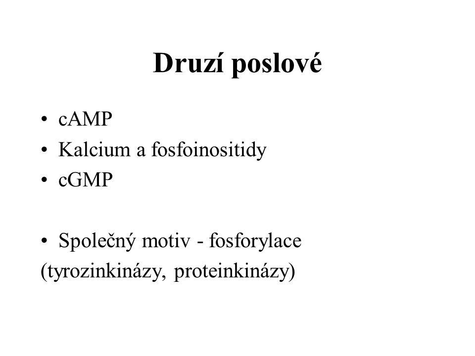 Druzí poslové cAMP Kalcium a fosfoinositidy cGMP